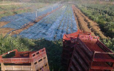 Jardiner en limitant le travail du sol