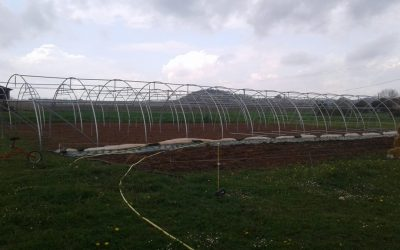 Le nouveau jardin